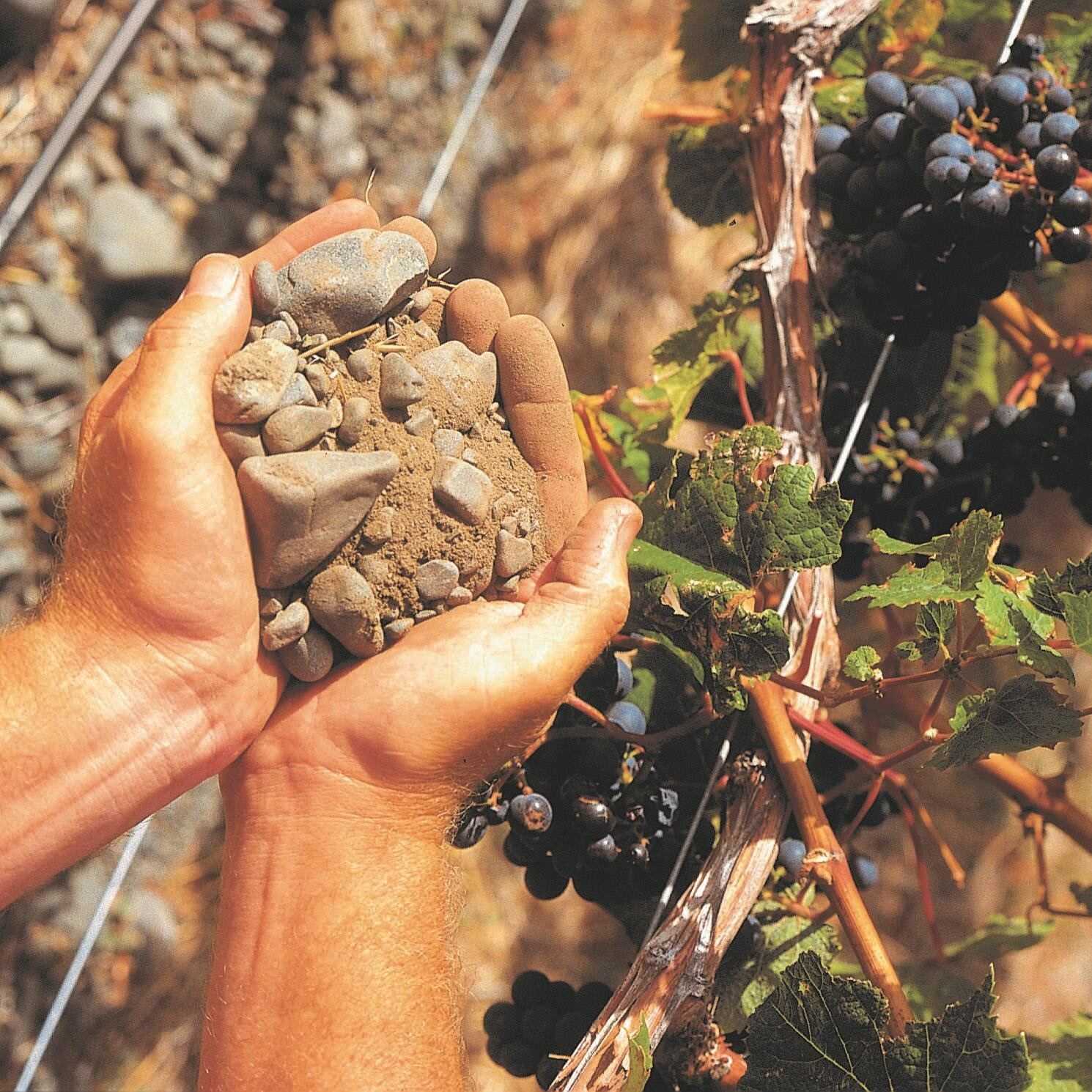 Terroir begins with the soil!